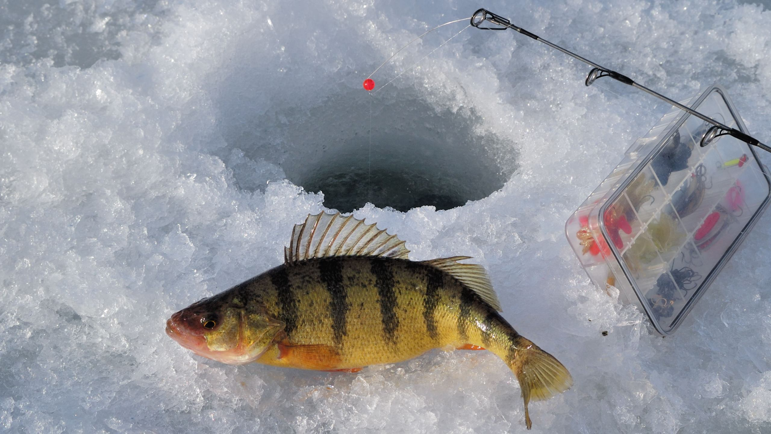 ICE FISHING_1486764722385.jpg