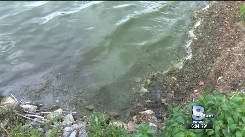 Blue-green algae blooms spread in Conesus Lake_91429782-159532