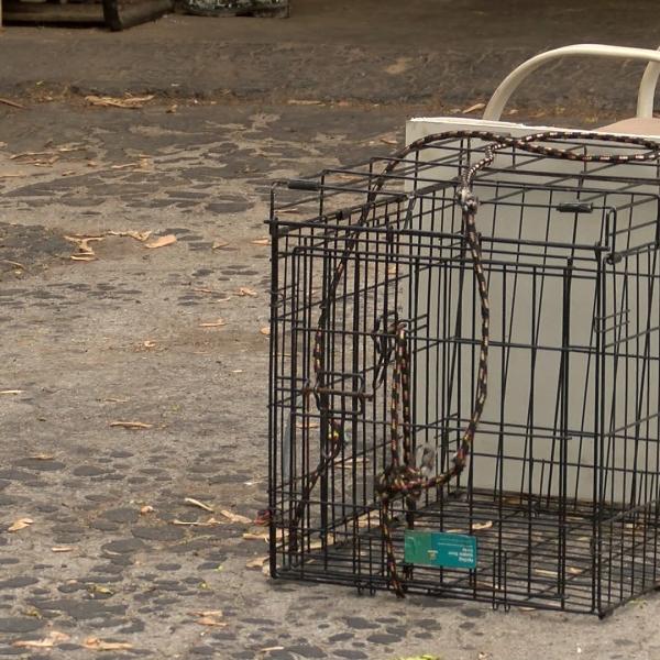 rabies cage_1529096090975.jpg.jpg