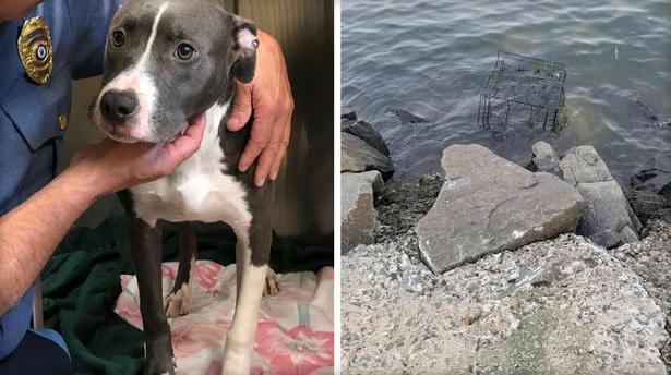 NJ Dog Found_1533197125324.jpg.jpg