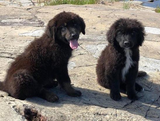 Puppies Rescued_1533409836064.jpg.jpg