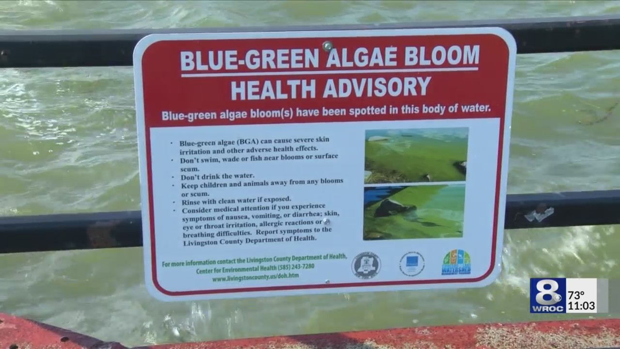 Blue_Green_Algae_spotted_at_local_lakes_0_20180902034315
