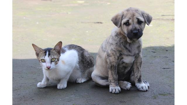 cat and dog_1537547295442.jpg.jpg