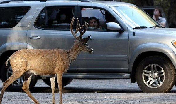Deer car accident_1538831342347.jpg.jpg