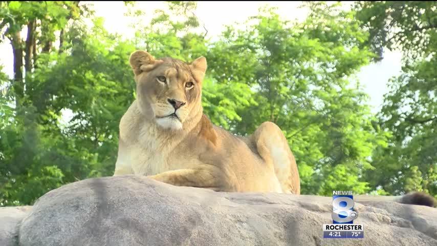 Seneca Park Zoo-s expansion project begins_81632667