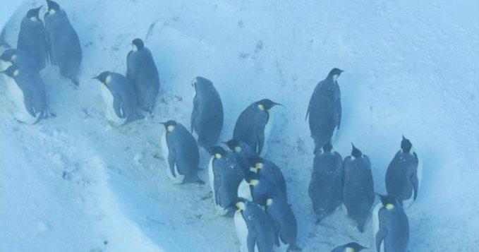 Penguins in film_1542716190161.jpg.jpg