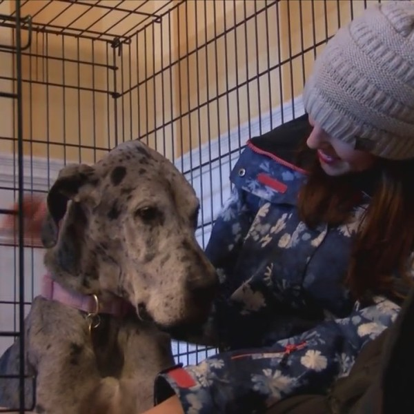 Pittsford rescue dog found weeks after she ran off