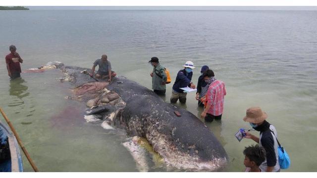 dead whale_1542749584525.jpg_62741833_ver1.0_640_360_1542827233112.jpg.jpg