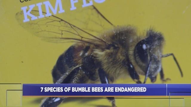 Endangered bees_1547203538704.jpg.jpg
