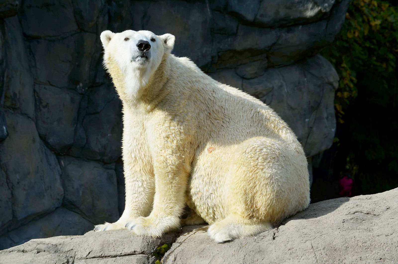 Polar bear Anoki_Elesa Kim (1)_1550592297643.jpg.jpg