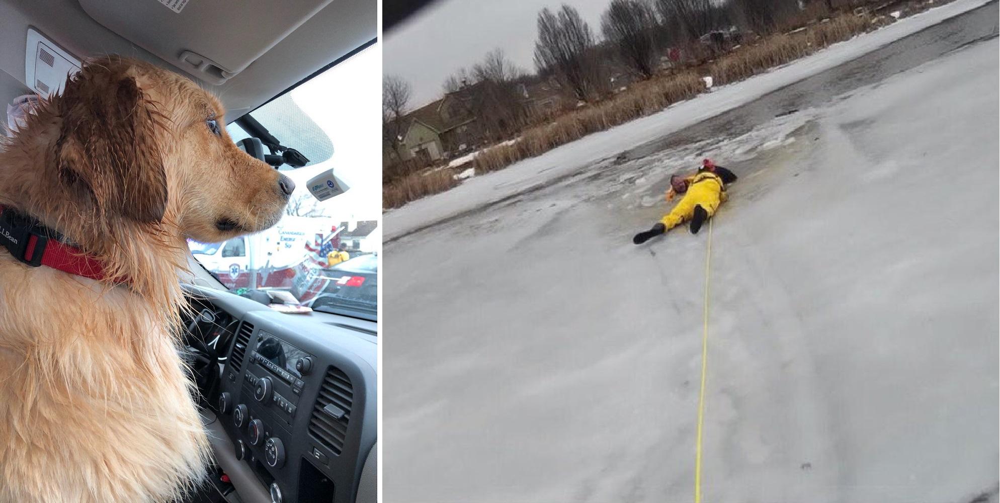 dog rescued_1551046976034.jpg.jpg
