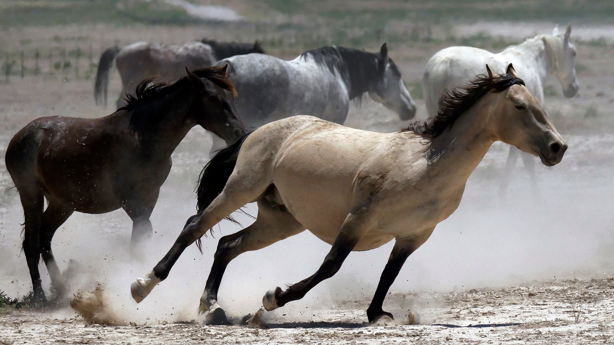 Wild_Horses_Drought_31432-159532.jpg25973757