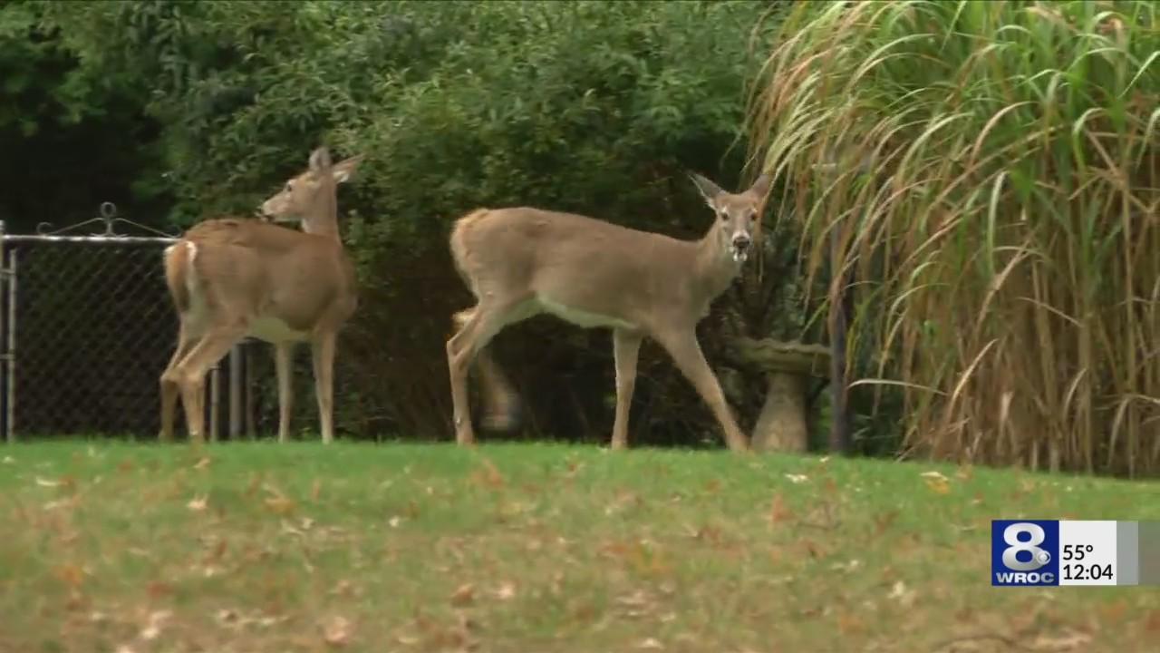 deer bow hunting_1538758653614.jpeg.jpg