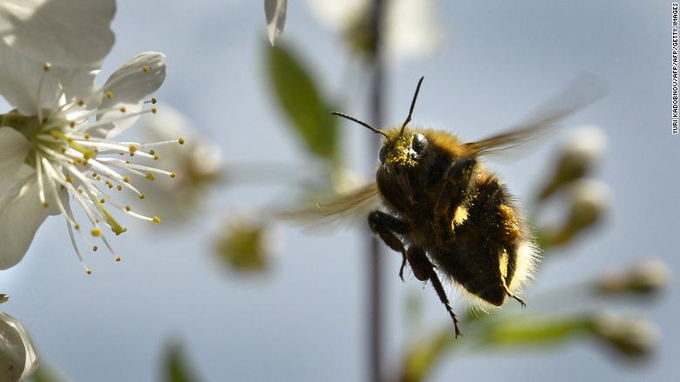 Climate change pollen bees_1555068758157.png.jpg