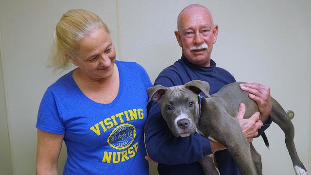 Pit bull adopted humane society rescue_1556196169471.jpg.jpg