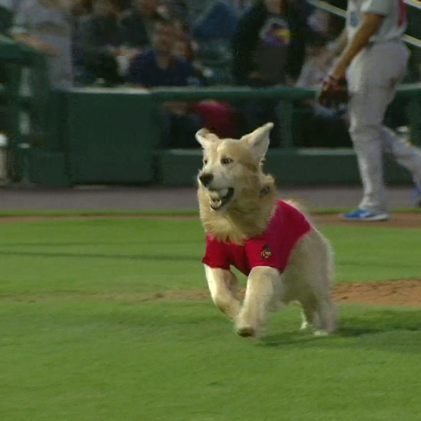 Milo the Bat Dog helps Red Wings beat Bison for second straight night