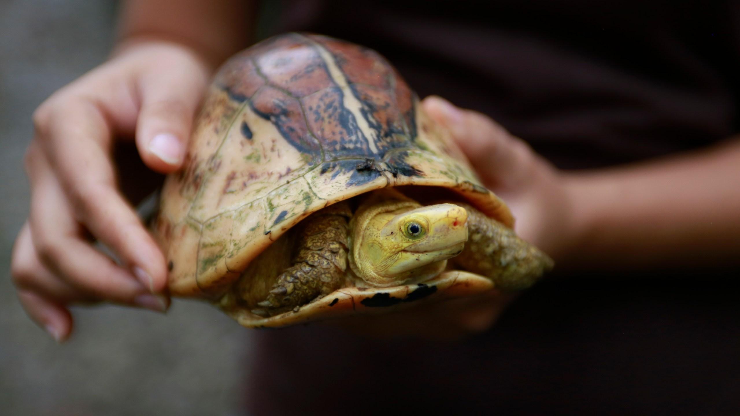 Vietnam Turtle Conservation