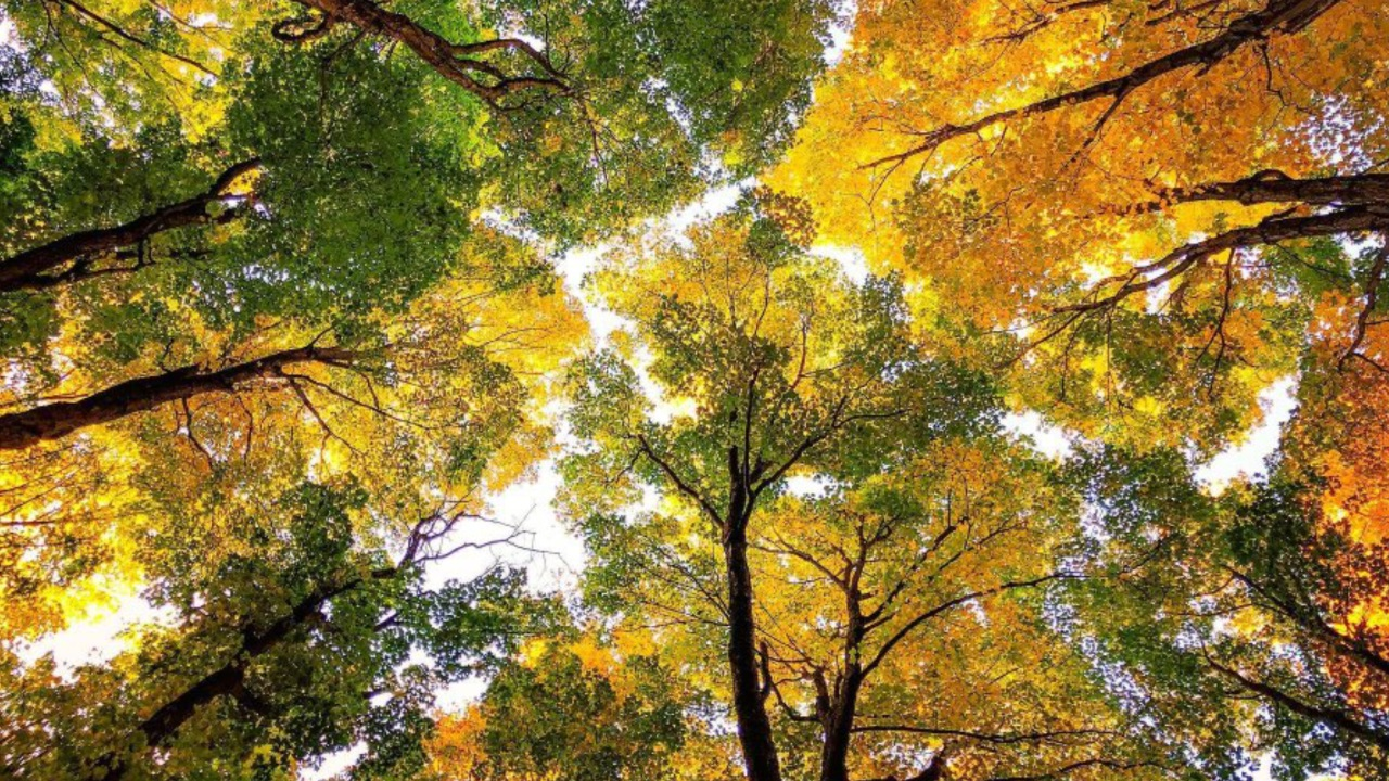 Fall Foliage Explained Why Leaves Change Color In The Fall Rochesterfirst